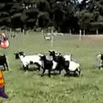 Humor - Não mexa com Goku