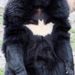 Humor - Batman? Não, aqui é o BAT-URSO!