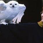 Cinema - Daniel Radcliffe diz que seus pais rejeitaram papel de Harry Potter