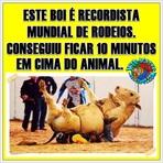 Humor - Boi recordista mundial de rodeios