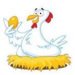 Humor - Ovo de galinha e teta de porca