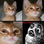 Memes - Axei meu gato!!