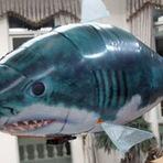 Curiosidades - Tubarão voador toca terror em aeroporto.