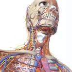 7 perguntas curiosas sobre o corpo humano