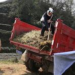Curiosidades - Chinês cria chá mais caro do mundo usando fezes de panda como adubo.