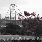 Arte & Cultura - Ponte Hercílio Luz - II
