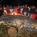 Curiosidades - Filipinos pegam crocodilo gigante assassino