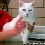 Animais - Gata sobrevive a queda de 19 andares nos EUA.