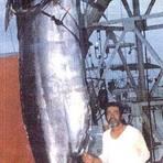 Animais - Os maiores animais aquáticos já capturados