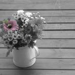 Tutoriais - Aprenda a usar a ferramenta Eraser Tool e saturação nas suas fotos!