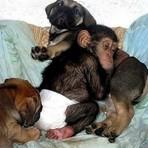 Animais - Não maltrate nem abandone, Dê pra adoção.