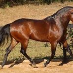 Livros - Cavalo de Jennifer (O Destino de Uma Dama)