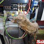 Entretenimento - Rato de 40 cm é encontrado  morto dentro de ar-condicionado