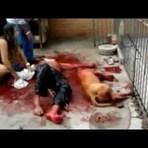 Animais - Ataque de pit bull