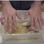 Religião - Imposição de mãos - mistificação ou ciência desconhecida?