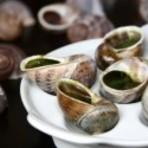 Animais - Criação de escargots é um investimento lucrativo