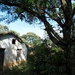 Contos e crônicas - Título: casinha no mato