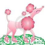 Contos e crônicas - A poodle rosa