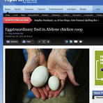 Curiosidades - Galinha coloca ovo gigante nos EUA