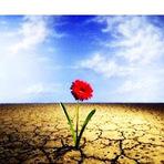 Poesias - Aos que vierem