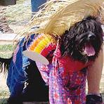 Animais - Em São Paulo, Cães e gatos para adoção ganham festa junina