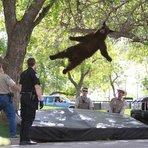Entretenimento - Pela 2ª vez no mês, urso é derrubado de árvore em área residencial nos EUA