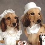 Animais - Registro de animais de estimação