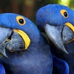 Turismo - Conheça os lindos atrativos naturais do Pantanal!