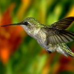 As melhores fotos da natureza!