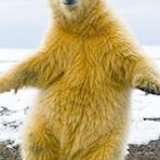 Entretenimento - Urso é flagrado fazendo movimentos como se estivesse dançando