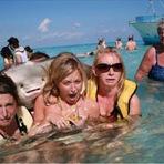 Entretenimento - Arraia surpreende ao 'posar' para foto com turistas nas Ilhas Cayman