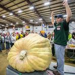 Entretenimento - Americano bate recorde mundial ao cultivar abóbora de 911 quilos