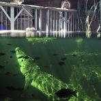 Entretenimento - Após três meses de hibernação, crocodilo ganha primeira refeição