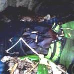 Violência - Assassinato sem esclarecimentos em Capela do Alto Alegre-Ba