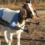 GLS - Esse cabra homofóbico cordial
