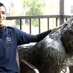 Entretenimento - Americano encontra estátua de gorila de 300 Kg na rua e procura dono
