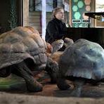 Entretenimento - Richard Clayderman toca para incentivar acasalamento de tartarugas
