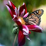 Entretenimento - A flor e a Borboleta
