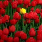 Entretenimento - Flor mais linda do Jardim!