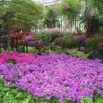 Entretenimento - Schizanthus – precauções e cuidados
