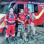 Cães de resgate no Rio de Janeiro