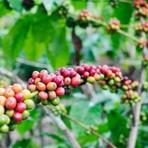 Meio ambiente - Pesquisadores desenvolvem planta com tolerância à seca