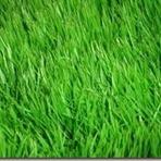 Estilo de Vida - A grama do vizinho