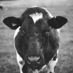 Meio ambiente - A Engrenagem que move a Industria da Carne