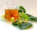 Saúde - Chá de guaco, ótimo para problemas respiratórios e para males que afetam o pulmão