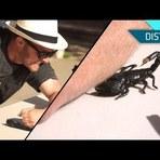 Entretenimento - Doloroso: veja um homem ser picado por um escorpião em câmera lenta