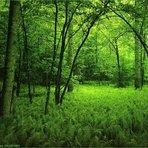 Meio ambiente - Brasil fará levantamento detalhado das suas florestas: 30 anos depois
