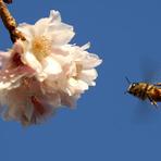 Meio ambiente - Por que as abelhas estão morrendo
