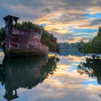 Meio ambiente - Floresta flutuante nasce em navio abandonado