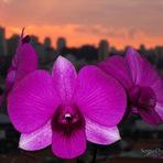 Meio ambiente - Fotos de orquídeas - Um novo cenário
